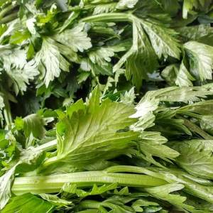 can you freeze celery leaves
